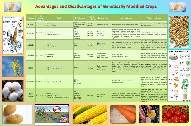 advantages and disadvantages of the genetically modified crops Advantages of genetically modified crops: have a desirably better taste and quality better production in lesser time, thereby providing food for more people.
