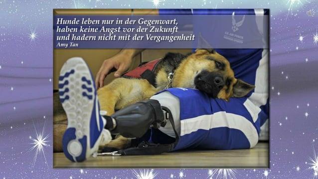 Adventkalender 2016 HundeArtig