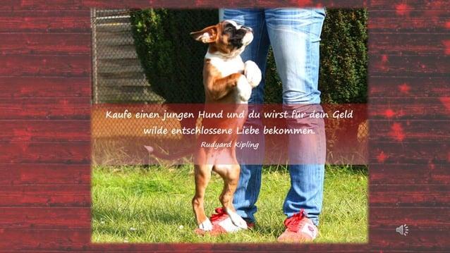 Die 10 Gesetze wie Hunde ihren Besitz regeln! 1. Wenn ich es mag, ist es meins! 2. Wenn ich´s im Maul habe, ist es meins! ...
