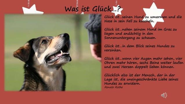 Mein Hund ist als Hund eine Katastrophe, aber als Mensch unersetzlich! Johannes Rau