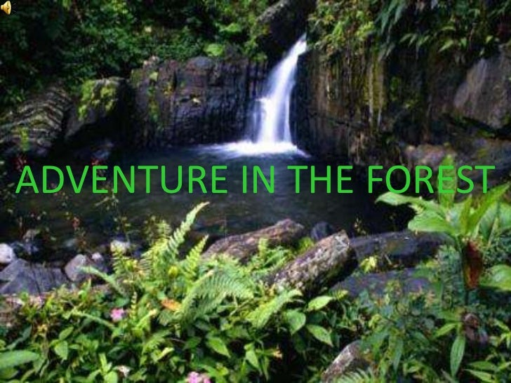 ADVENTURE IN THE FOREST<br />
