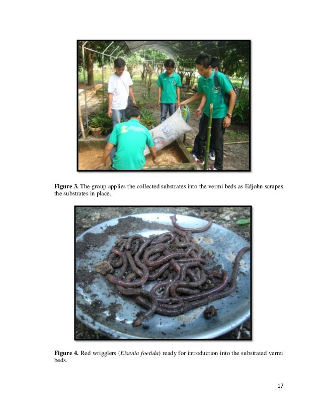 thesis on vermicomposting 'vermicompost' with the aid of earthworms (garg et al, 2006a suthar and singh   the actions of earthworms in the vermicomposting include substrate aeration.