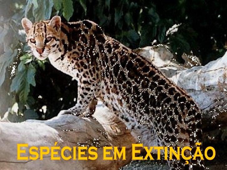 Espécies em Extinção