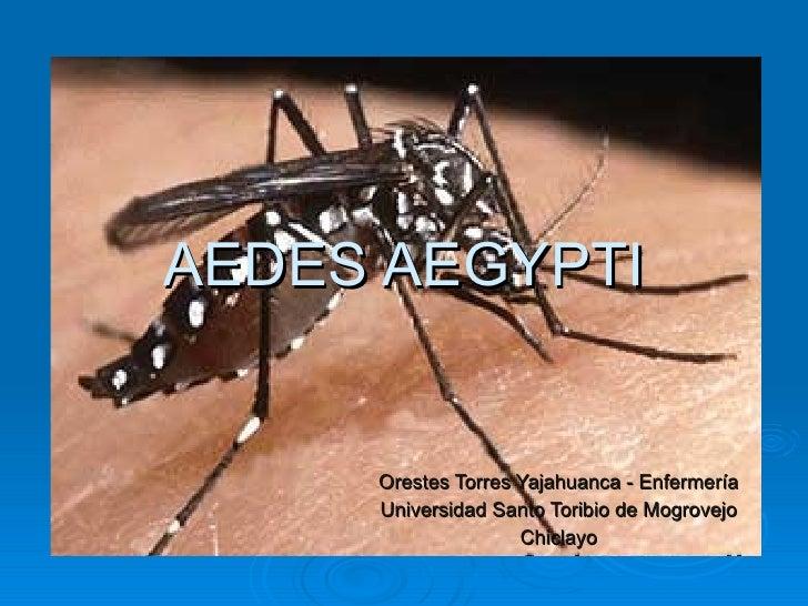 AEDES AEGYPTI        Orestes Torres Yajahuanca - Enfermería      Universidad Santo Toribio de Mogrovejo                   ...
