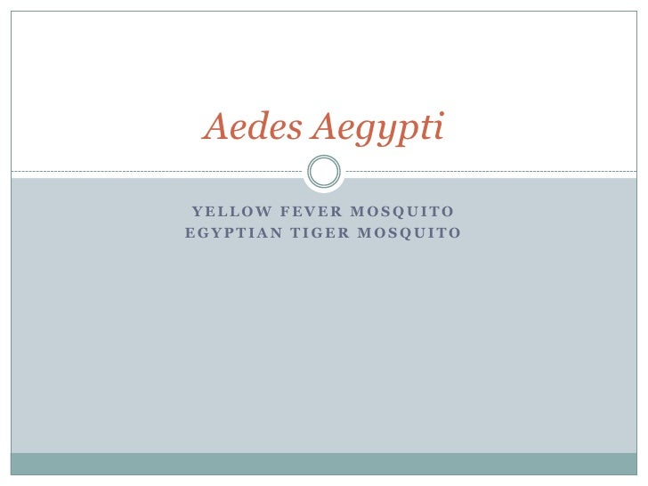 Yellow fever mosquito<br />Egyptian tiger mosquito<br />Aedes Aegypti<br />