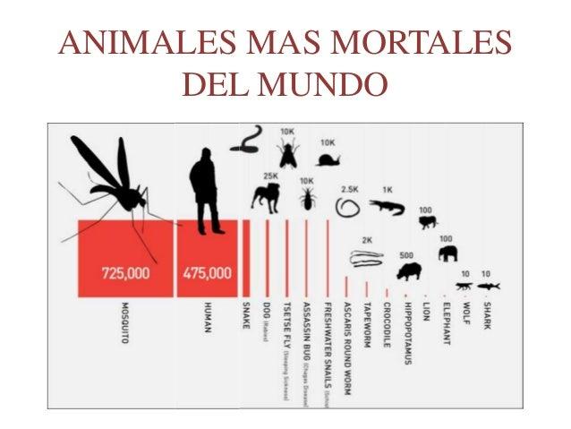ANIMALES MAS MORTALES DEL MUNDO
