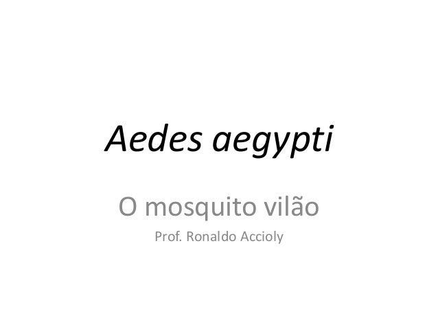 Aedes aegypti O mosquito vilão Prof. Ronaldo Accioly