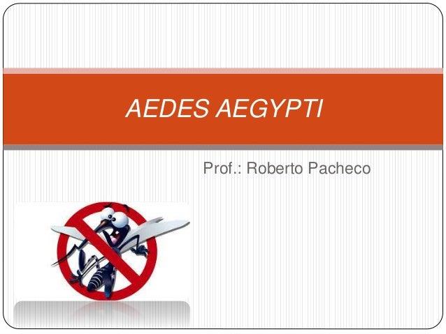 Prof.: Roberto Pacheco AEDES AEGYPTI