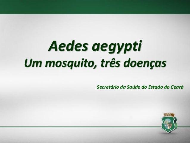 Aedes aegypti Um mosquito, três doenças Secretário da Saúde do Estado do Ceará