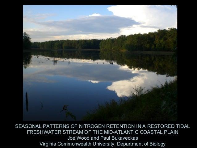 SEASONAL PATTERNS OF NITROGEN RETENTION IN A RESTORED TIDAL    FRESHWATER STREAM OF THE MID-ATLANTIC COASTAL PLAIN        ...