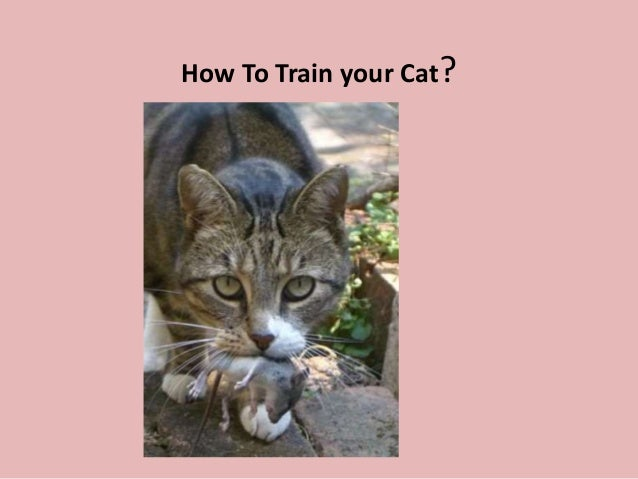 How To Train your Cat?  Cat