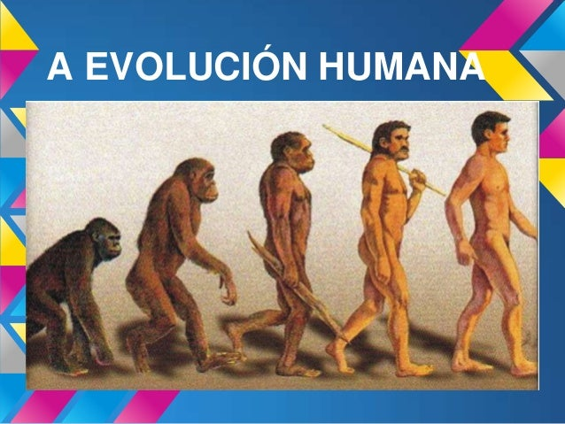 A EVOLUCIÓN HUMANA