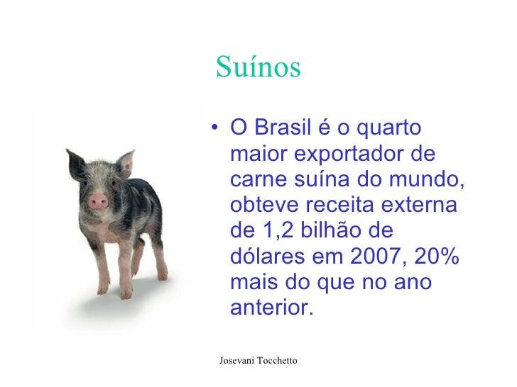 Suínos <ul><li>O Brasil é o quarto maior exportador de carne suína do mundo, obteve receita externa de 1,2 bilhão de dólar...
