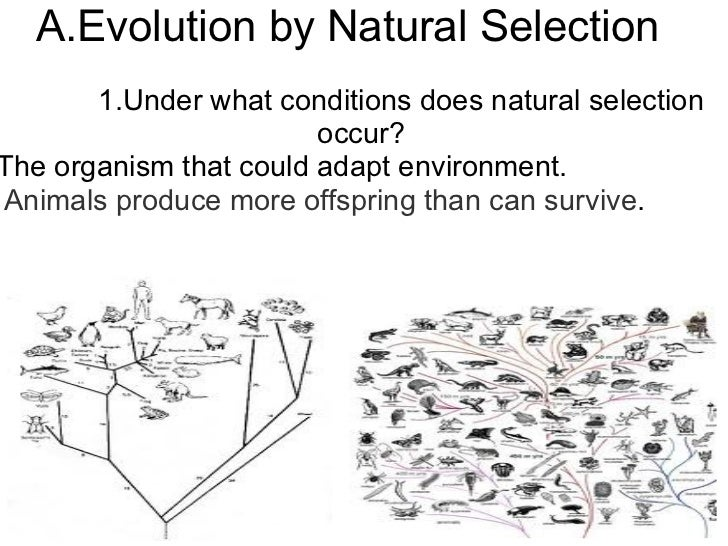 Under What Conditions Does Natural Selection Occur