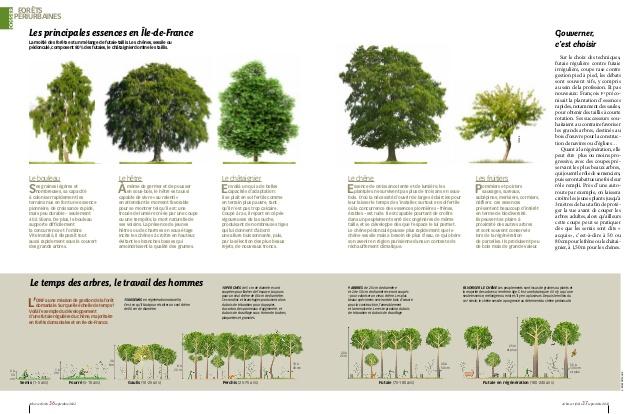 Fabuleux essences et cycles forestiers-Arbres et Forêts-Terre sauvage NH33