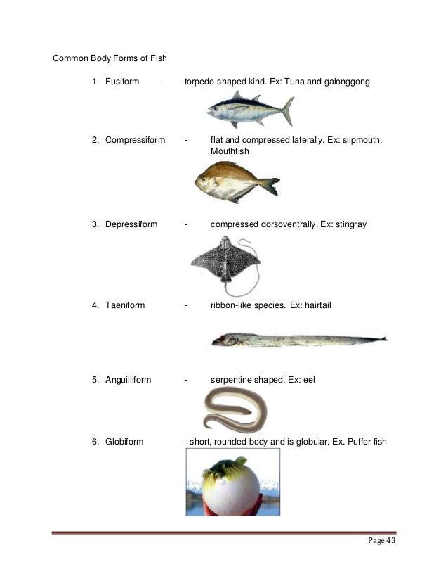 Fish Body Shape Diagram Enthusiast Wiring Diagrams