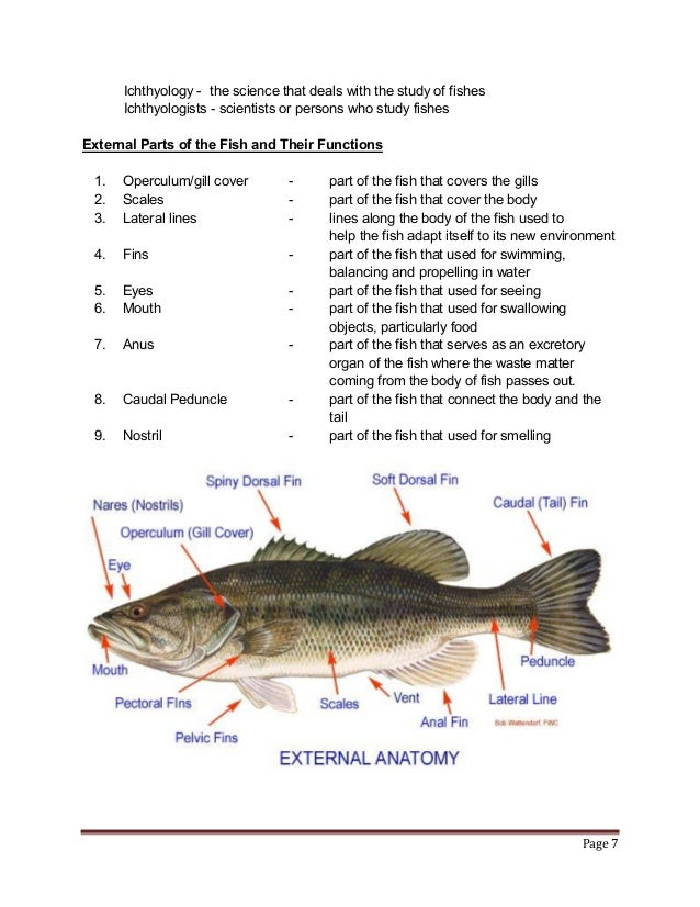 Nile Perch Dissection Diagram All Kind Of Wiring Diagrams