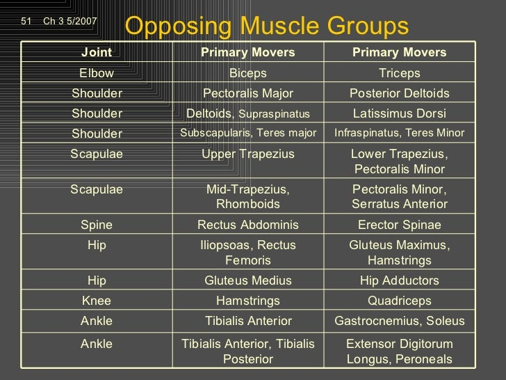 kinesiology opposing muscle group homework
