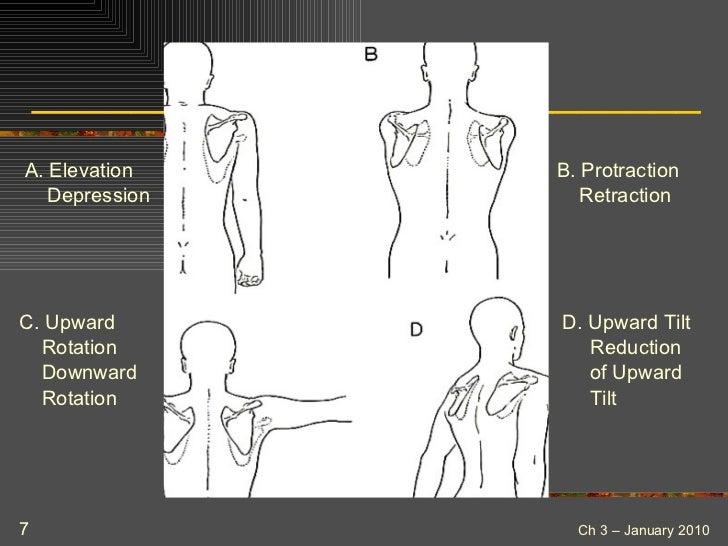 Afaa Pft Anatomy And Kinesiology