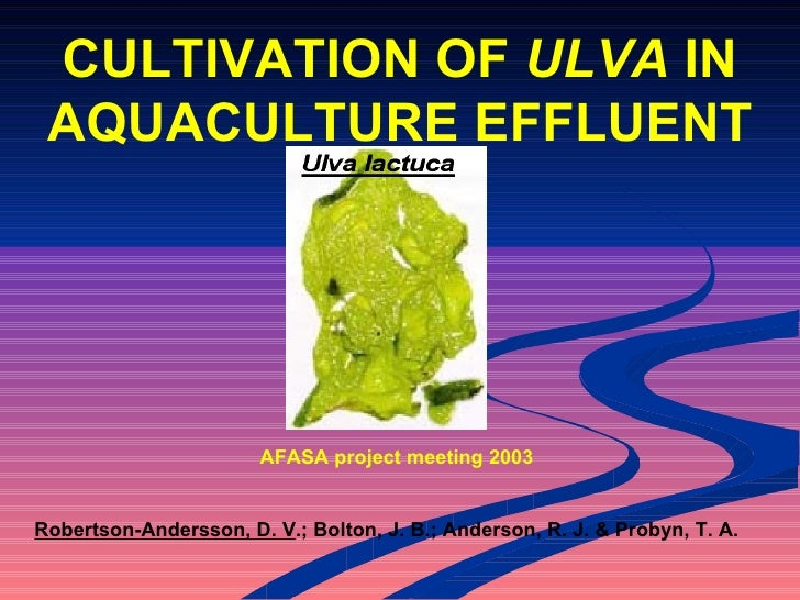 Ulva Slide CULTIVATION OF ...