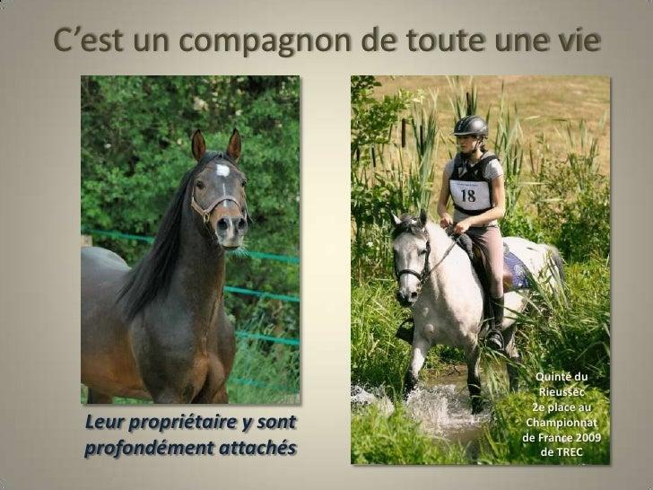 C'est un compagnon de toute une vie<br />Quinté du Rieussec<br />2e place au Championnat de France 2009 de TREC<br />Leur ...