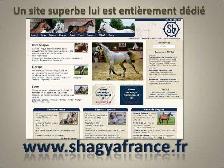 Un site superbe lui est entièrement dédié<br />www.shagyafrance.fr<br />