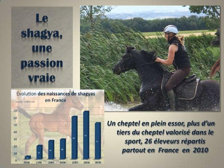 Le shagya,une passion vraie<br />Naissances en France :<br />Un cheptel en plein essor, plus d'un tiers du cheptel valoris...