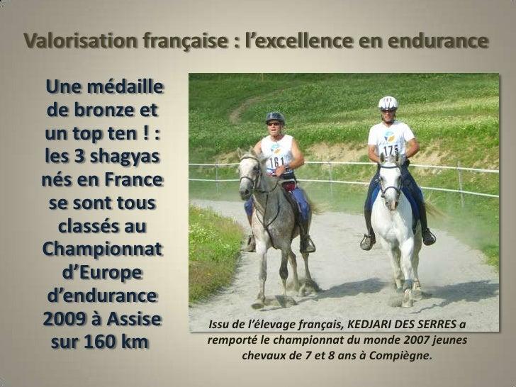 Valorisation française : l'excellence en endurance<br />     Une médaille de bronze et un top ten ! : les 3 shagyas nés en...