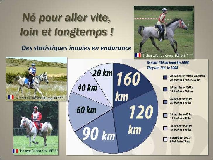 Né pour aller vite,loin et longtemps !<br />Des statistiques inouïes en endurance<br />Etalon Laïos de Crouz, IRE 148 ****...