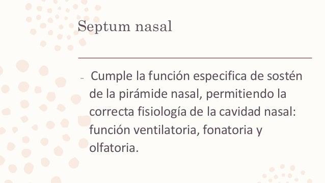 Septum nasal – Cumple la función especifica de sostén de la pirámide nasal, permitiendo la correcta fisiología de la cavid...