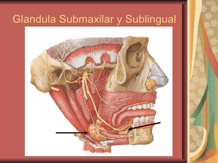 Glandula Submaxilar y Sublingual