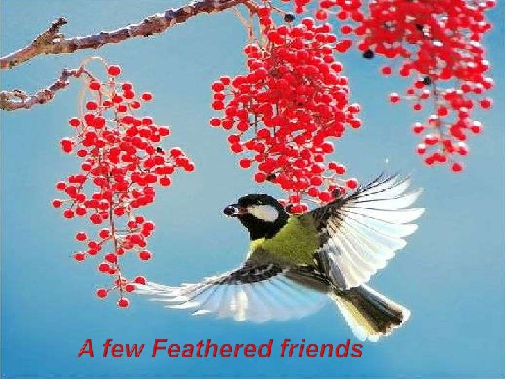 A few Feathered friends<br />