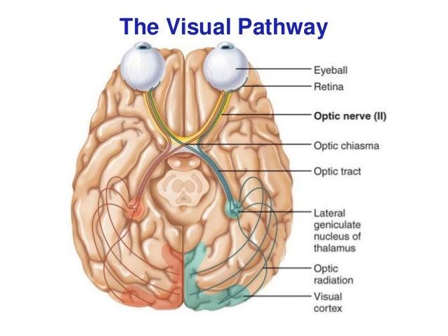 Afferent visual pathway