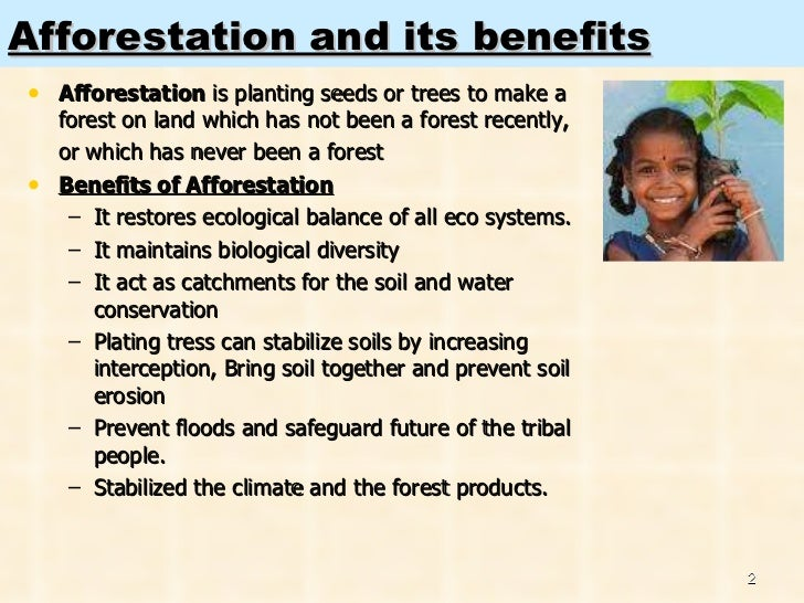 essay on need for afforestation