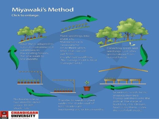 Benefits of afforestation