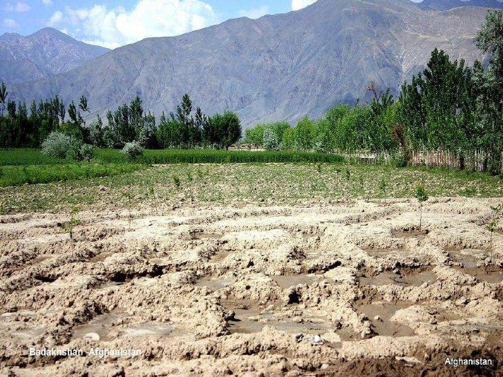 agriculture in afghanistan essay Nearly 800 million people across the globe will go to bed hungry tonight, most of them smallholder farmers who depend on agriculture to make a living and feed their.