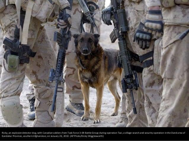 Afghanistan: Dogs of War Slide 2