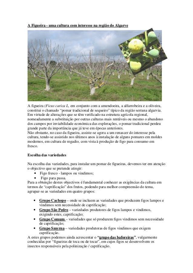 A Figueira - uma cultura com interesse na região do Algarve A figueira (Ficus carica L, em conjunto com a amendoeira, a al...