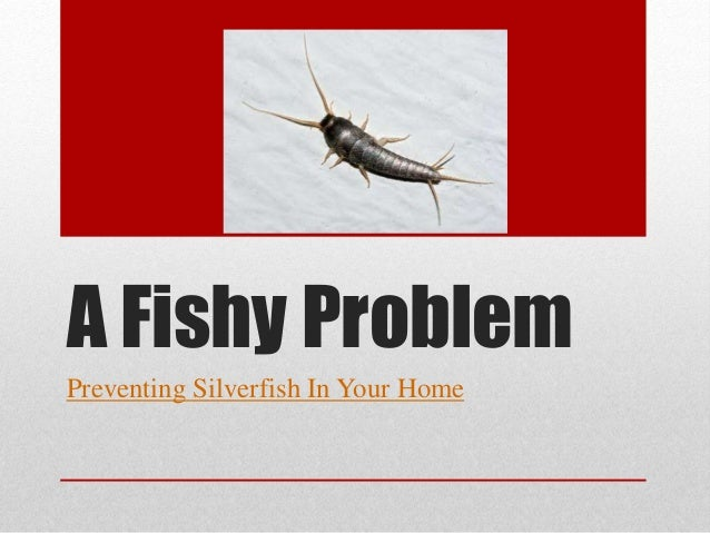 A Fishy Problem Preventing Silverfish In Your Home