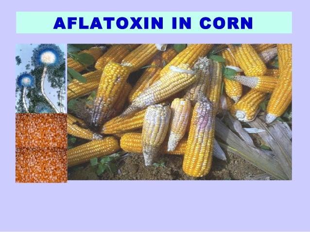 Aflatoxin lecture