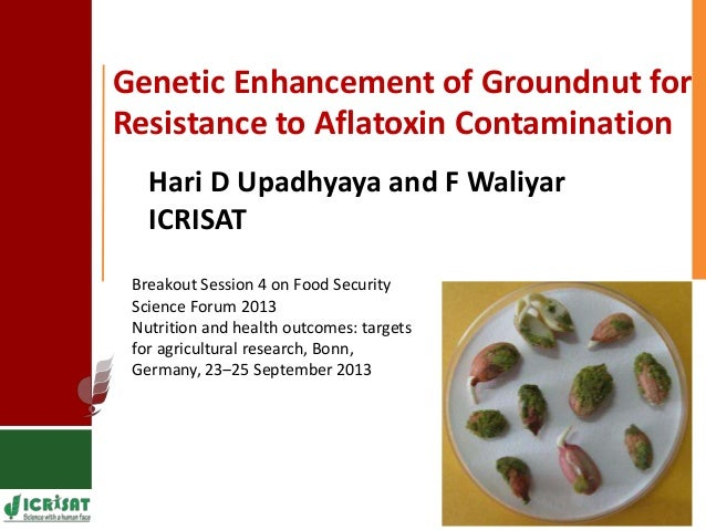 Genetic Enhancement of Groundnut for Resistance to Aflatoxin Contamination Breakout Session 4 on Food Security Science For...