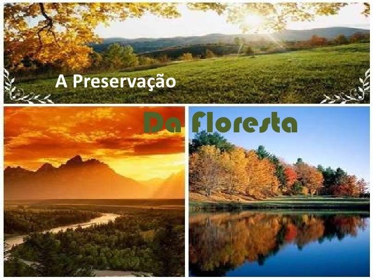 A Preservação         Da Floresta