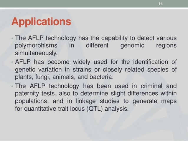 detecting erecta gene using pcr and qtl analysis Part of the reason for this is that rsa is a complex, or quantitative, trait that is controlled by many genes and is therefore not amenable to traditional genetic analysis we have exploited natural variation among ecotypes of the model plant arabidopsis thaliana to identify quantitative trait loci (qtl) that regulate root development and the.