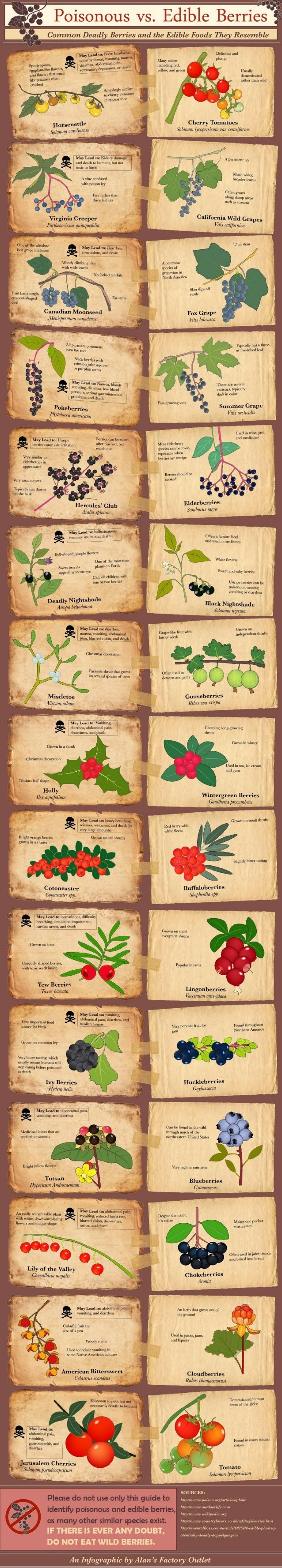 Poisonous vs Edible Berries - Common Deadly Berries and the Edible Foods they Resemble