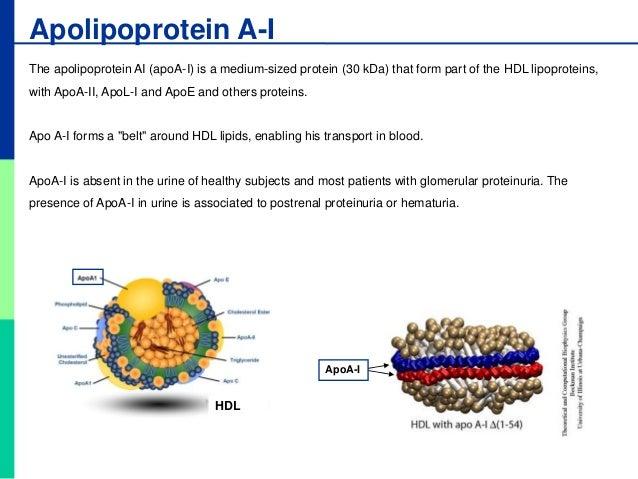 nephrotic syndrome steroid resistant indian pediatrics