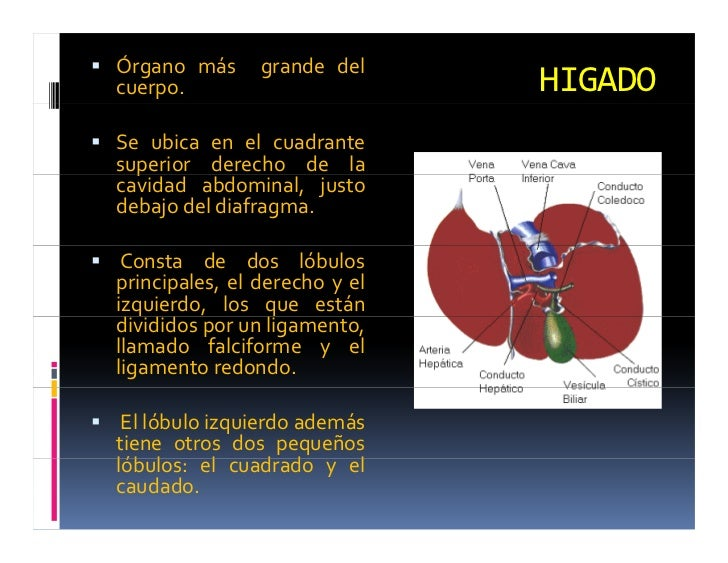 Funcion Hepatica