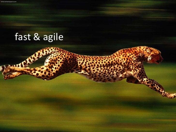 fast & agile<br />