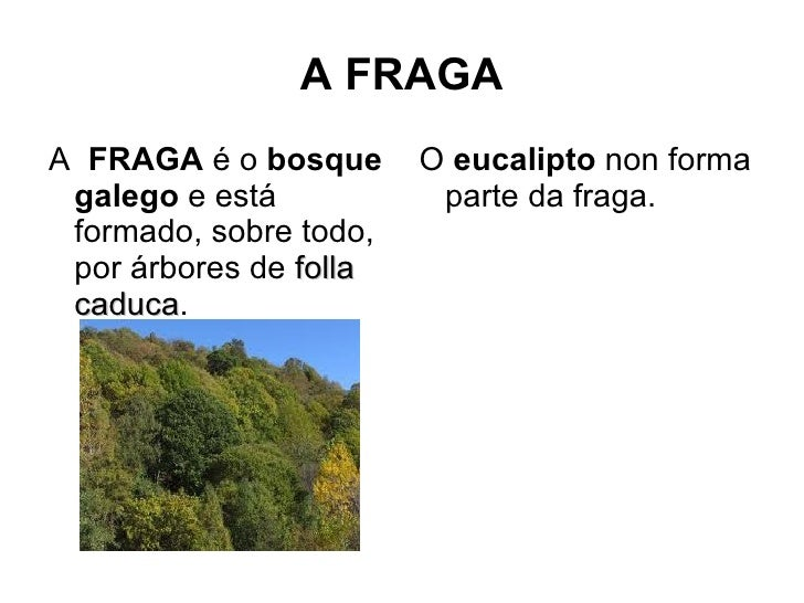 A FRAGAA FRAGA é o bosque      O eucalipto non forma galego e está           parte da fraga. formado, sobre todo, por árbo...
