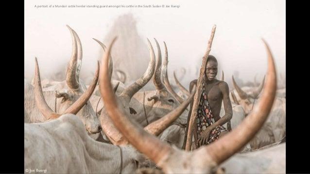 A portrait of a Mundari cattle herder standing guard amongst his cattle in the South Sudan © Joe Buergi
