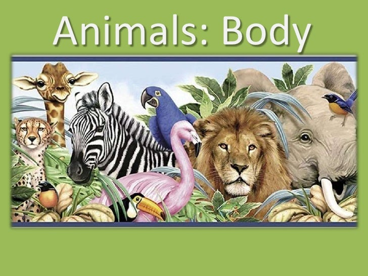 Animals: Body
